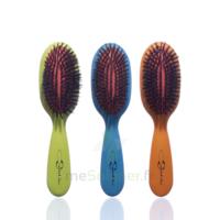 Cartel Brosse Cheveux Pneumatique Sanglier /1 à Arcachon